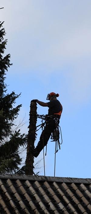 Tips og tricks til dine træer og til haven, vestjylland